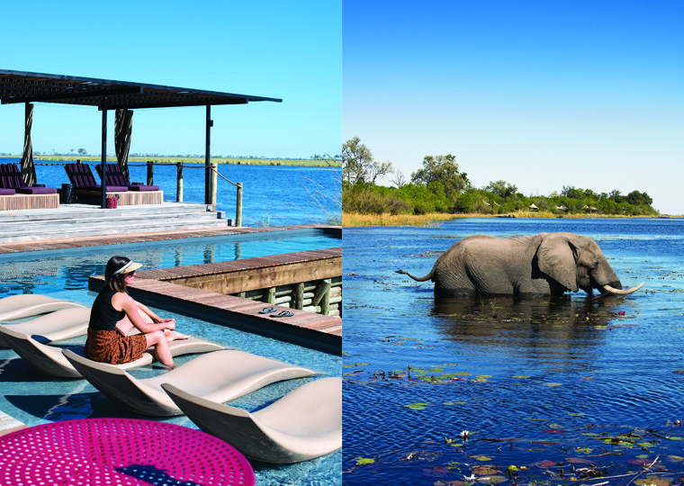 DumaTau's lagoonside lap pool and an elephant grazing on water lilies in the Linyanti's Osprey Lagoon.